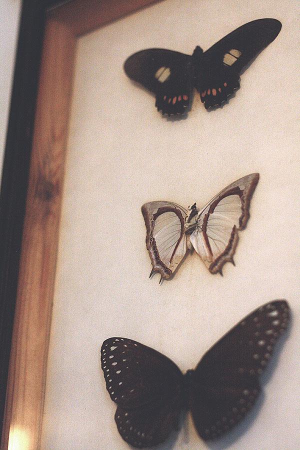 morebutterflies3