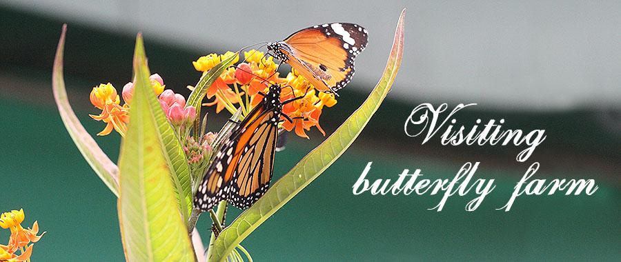 butterlyfarmbanner