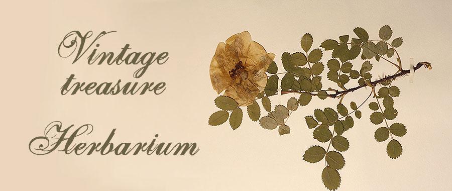 herbariumbanner